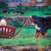 Когда у тебя есть собака :: Екатерина Домбругова