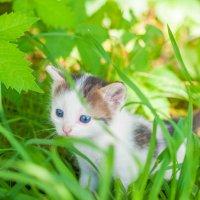 Котёнку месяц :: Светлана