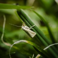 в стране дремучих трав :: ник. петрович земцов
