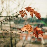 Осенняя осень :: Вадим