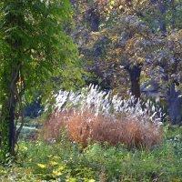 В ботаническом саду :: Raisa Ivanova
