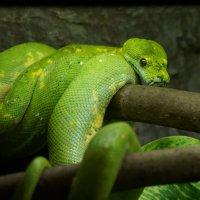Зеленый змей (2) :: IURII