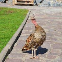 Птичье любопытство :: Полина Потапова