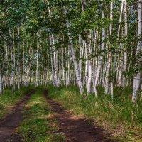 лесная дорога :: Сергей Сол