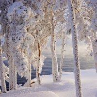 В глубокой заморозке :: Галина Подлопушная