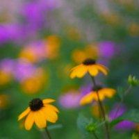 летние цветы 1 :: Дмитрий Барабанщиков