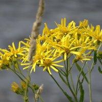 цветы побережья :: Михаил Жуковский
