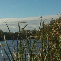 Озеро липовое :: марина ковшова