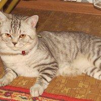 наш котейка) :: Странник Скромняга
