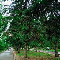 люди любят здесь гулять и днём и ночью :: Света Кондрашова