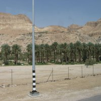 пальмы...пустыни :: Вера Ярославцева