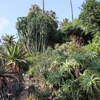 ботанический сад в Испании :: Вера Ярославцева