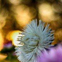 Цветок :: Юрий Фёдоров