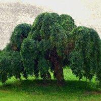 Раскидистое дерево :: Nina Yudicheva