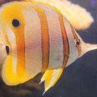 Рыба :: Мария