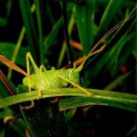 в зеленом травяном лесу :: Александр Прокудин
