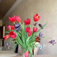 Home sweet home with tulip :: Tamarik Grigoryan