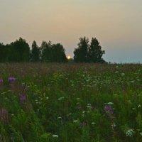 Полевые цветы. :: Роберт Хак.....