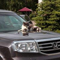 Крутой кот :: Евгений Никифоров