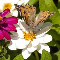 Утро бабочки_2 :: Alla