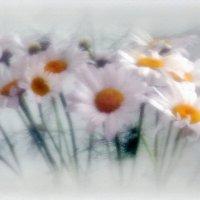 Ромашковый сон. :: Тамара Бучарская
