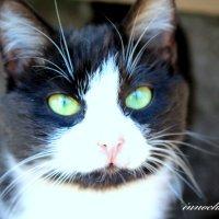 Безродный кот :: Инна Дегтяренко