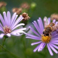 летние цветы 4 :: Дмитрий Барабанщиков