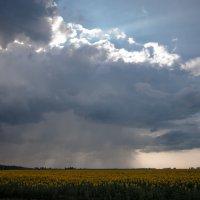дождь :: Роман Маканчук