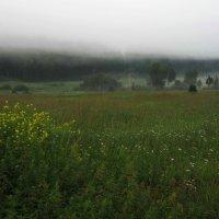 И даже серый туман похож на обман... :: Александр Попов