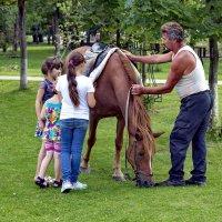 Всё о лошадях. :: Анатолий. Chesnavik.