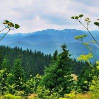 Горы Родопи :: Swetlana V