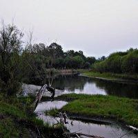 Лесной вечер :: Настя Перфильева