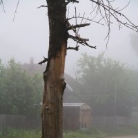 Утро Туманное... :: Александр Широнин