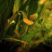 Из жизни цветов :: juvent