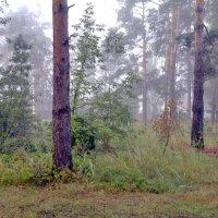 летний туман :: yuri Zaitsev