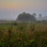 В травах... :: Roman Lunin