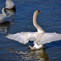 Белый орел ... :: Владимир Икомацких