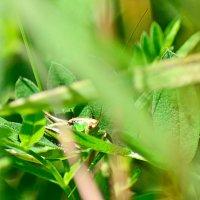 В зелени - зеленый :: Андрей Щетинин