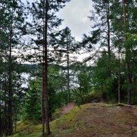 Прибрежный лес :: Алексей К