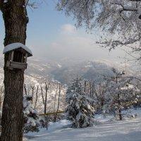 Казахстан, Алматы, Коктобе февраль 2016 :: Евгений Мергалиев