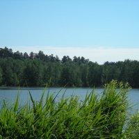 Раифское озеро :: марина ковшова