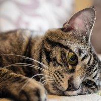 Невыносимая легкость бытия или печаль домашнего кота. :: Евгений Житников