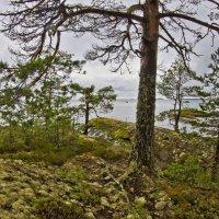 Сосны и скалы :: Валерий Талашов