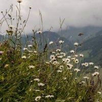 Ромашки и горы... :: ФотоЛюбка *
