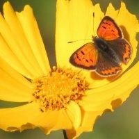 Бабочка :: Михаил Цегалко