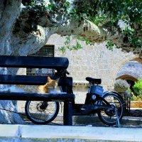 Кошка и мопед :: Ирина Сивовол