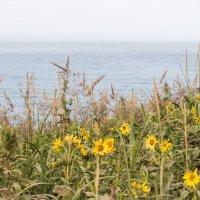 прогулки по берегу моря :: Наталья Литвинчук