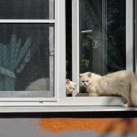 """""""Заходи, мои на даче..."""" :: Николай Белавин"""