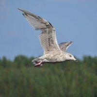 Море, а над морем чайки, чайки на просторе...... :: Tatyana Nemchinova
