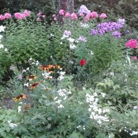 Летние цветы :: Дмитрий Никитин